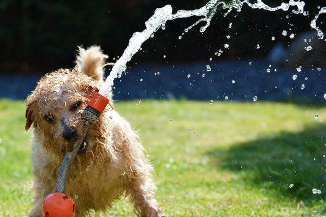 So Kühlen Sie Ihren Hund ab – Sommer, Sonne, Hechelwetter!