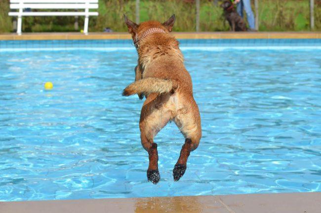 Wasser marsch – Die besten Tipps zum Schwimmen mit Hund