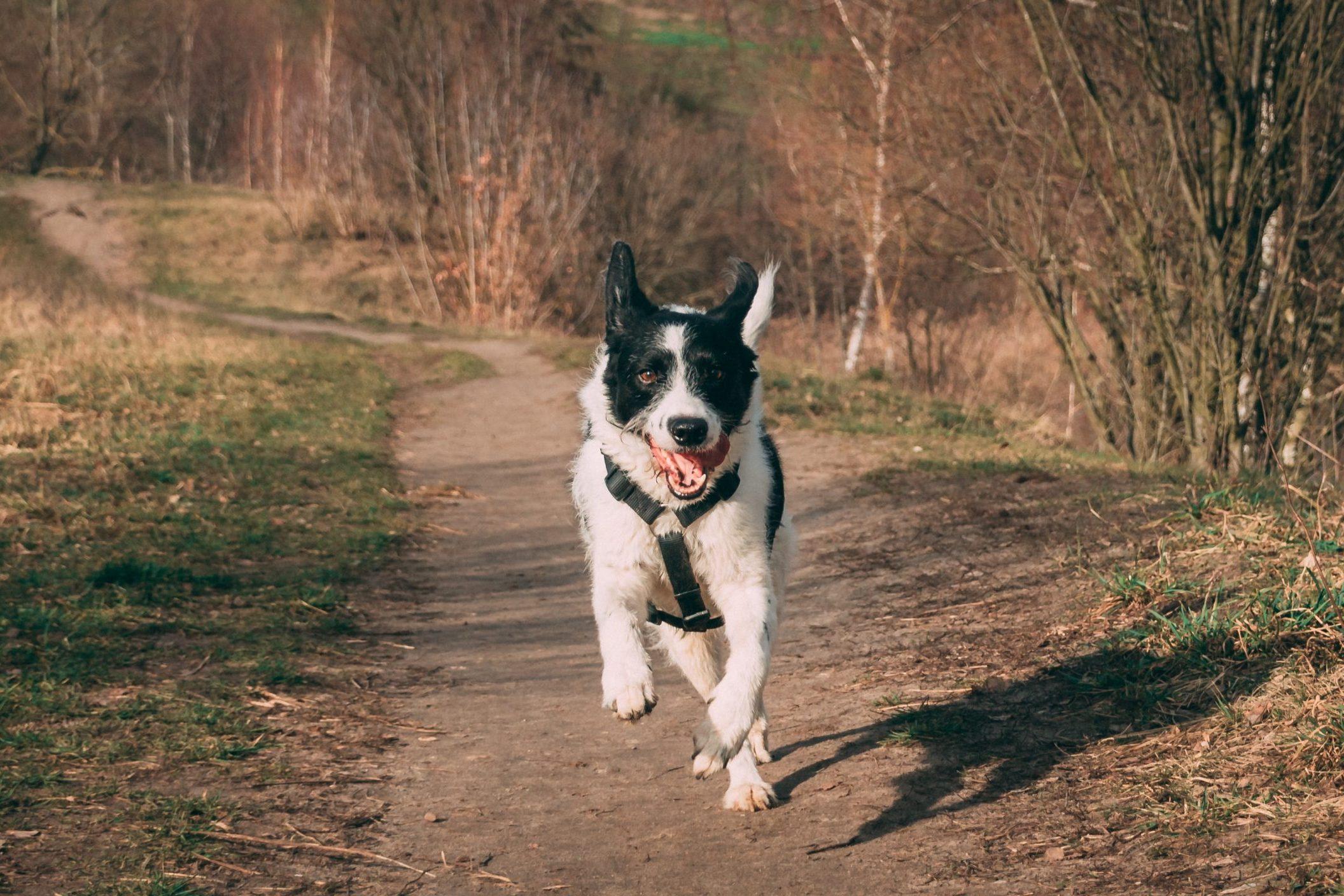 Gesunde Bewegung für den Hund – So bleibt dein Vierbeiner fit!