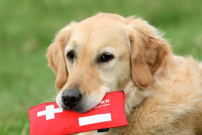 Diese Tipps können Leben retten: Erste Hilfe für deinen Hund