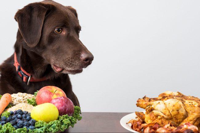 Vegane Ernährung für den Hund: Artgerecht oder Tierquälerei?