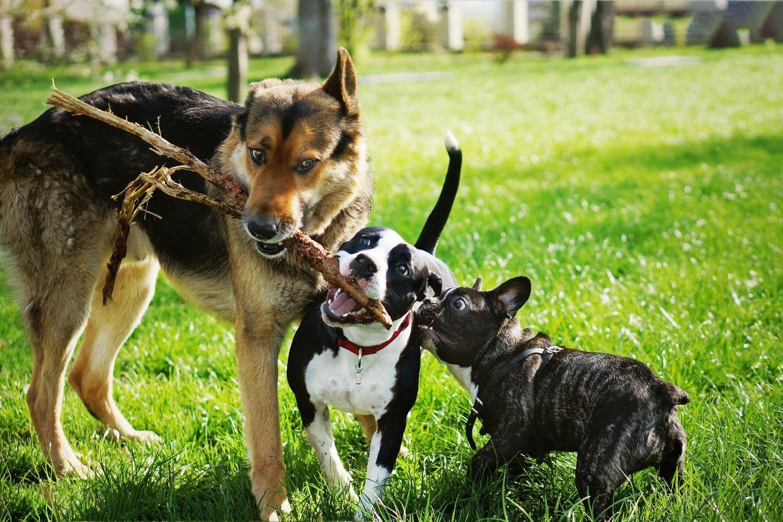 Stressfrei durch den Alltag – Wertvolle Tipps für Hundebegegnungen