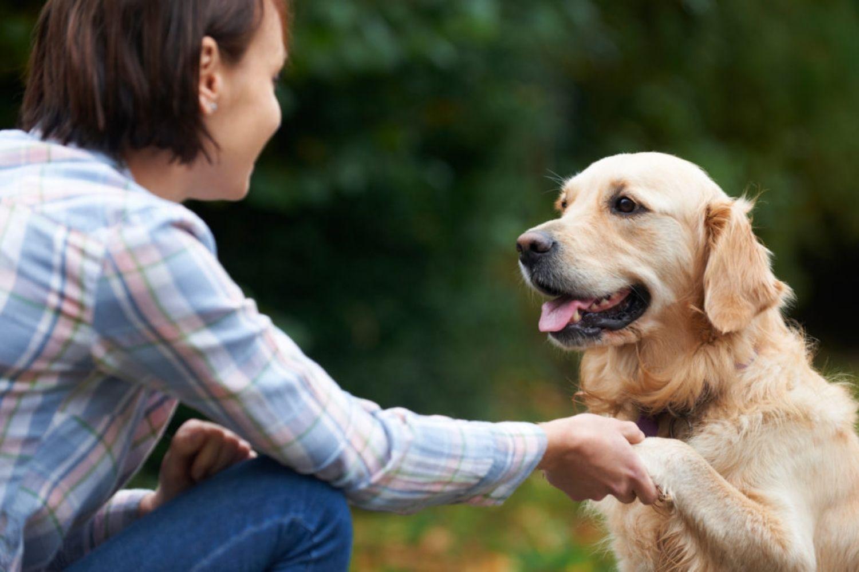 4 Geniale Übungen – So bleibt dein Hund fit!