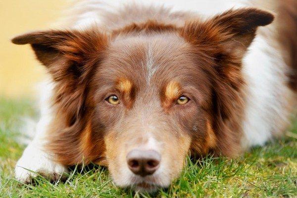 Trockene, warme Hundenase – Ist mein Hund krank?