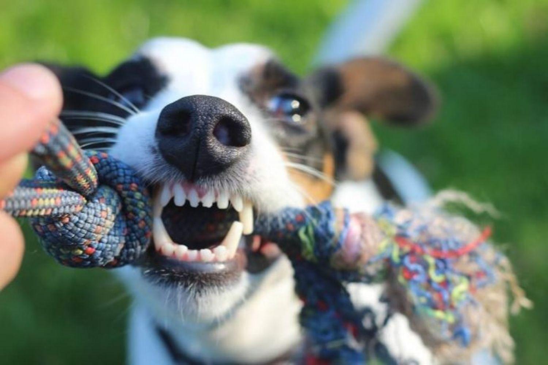 Maulhygiene – So bleibt dein Haustier gesund