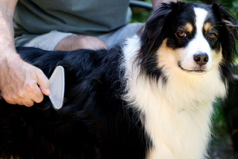 Glanzloses Fell beim Hund