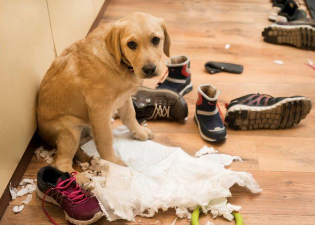 Hund hat Chaos verursacht