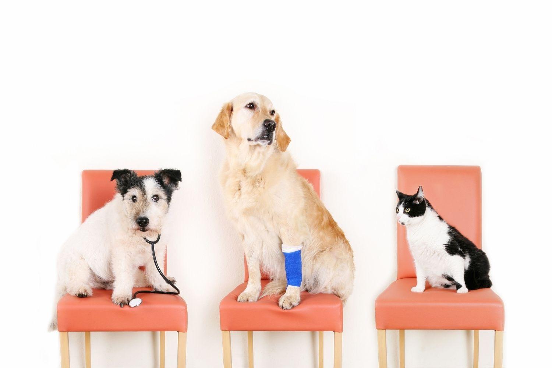So deutest du Krankheitssymptome als Tiersitter richtig