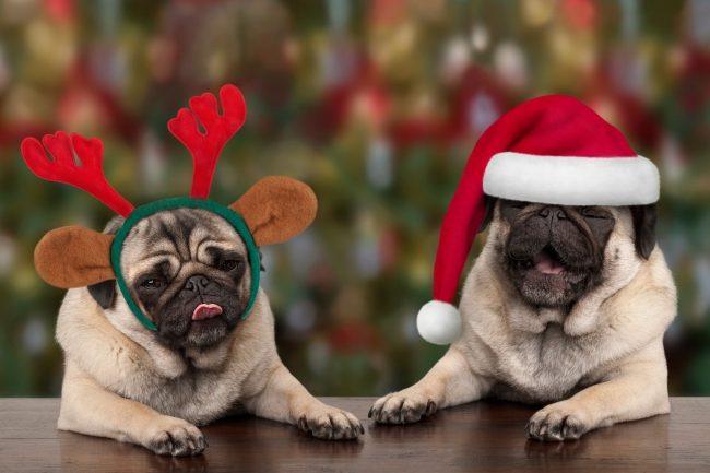 Weihnachtsrezept für deinen Hund – So bereitest du Ihm eine Freude