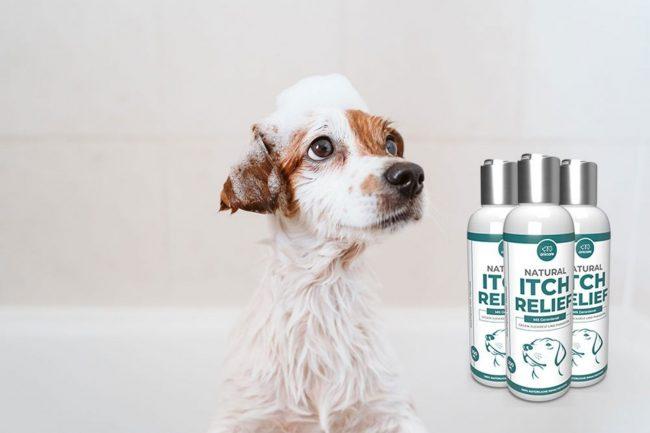 Natural Itch Relief von Anicare – der natürliche Schutz vor Parasiten für deinen Hund