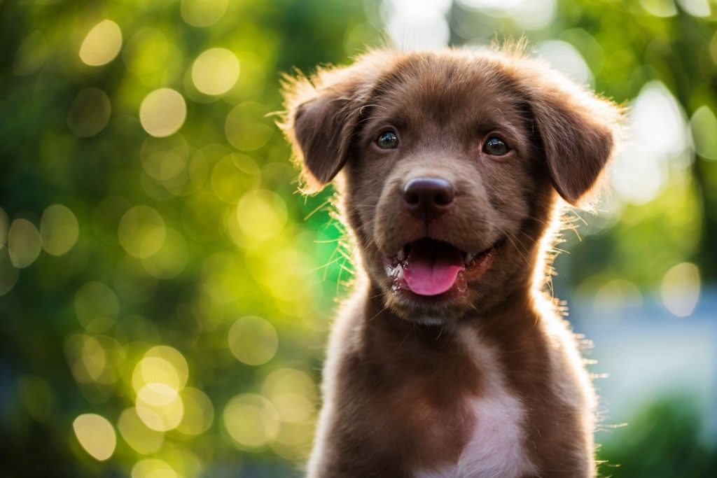 Welches Maß an Bewegung brauchen Welpen und Junghunde?