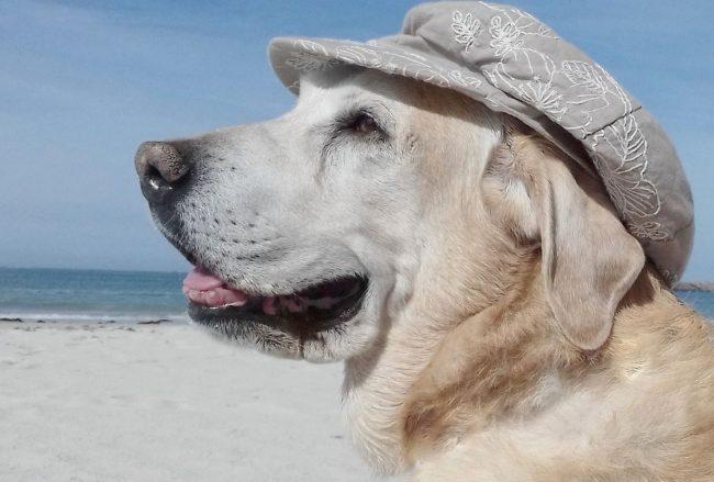 Happy dog am Strand