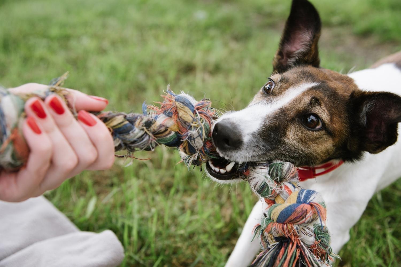 Muss dein Vierbeiner in die Hundeschule?