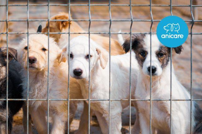 Hunde-Adoption: Zu viele Hunde, zu wenig Liebe