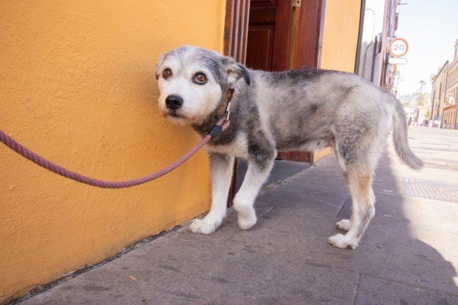 Ängstlicher Hund an der Leine