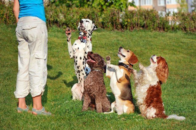 Vier Hunde in einer Reihe vor einer Frau mit Leckerli