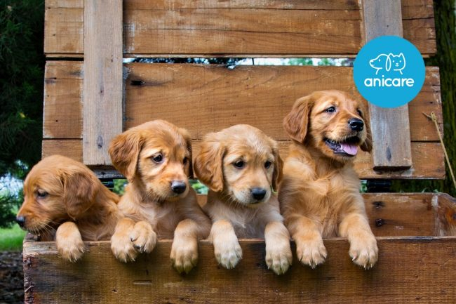 Hundekauf beim Züchter – Das solltest Du wissen