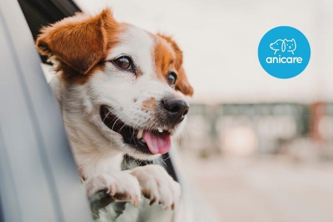 Darf dein Hund mit auf eine Autoreise?