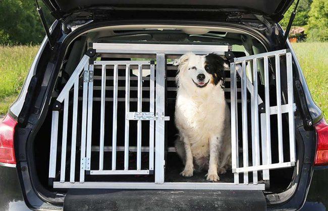 Hund in Hundebox