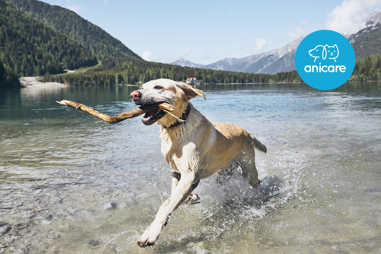 Die besten Tipps zum Schwimmen mit Hund