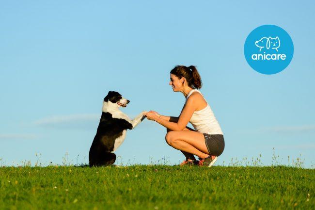 Hundeerziehung auf Basis von Vertrauen und Kooperation