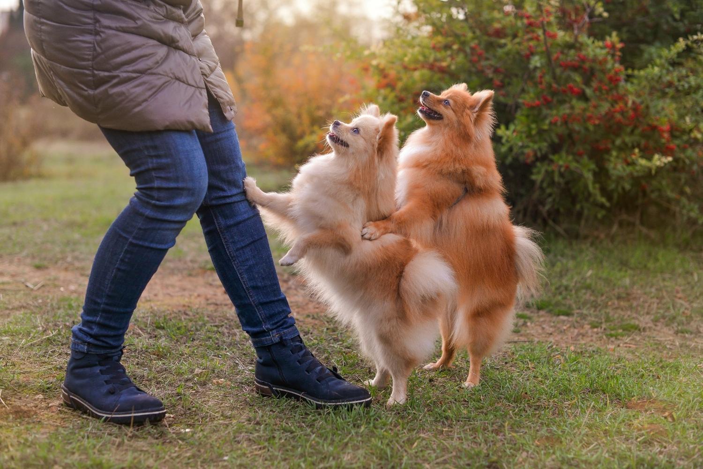 Zwei Hunde mit Besitzer