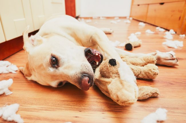 Hund kaut Stofftier kaputt
