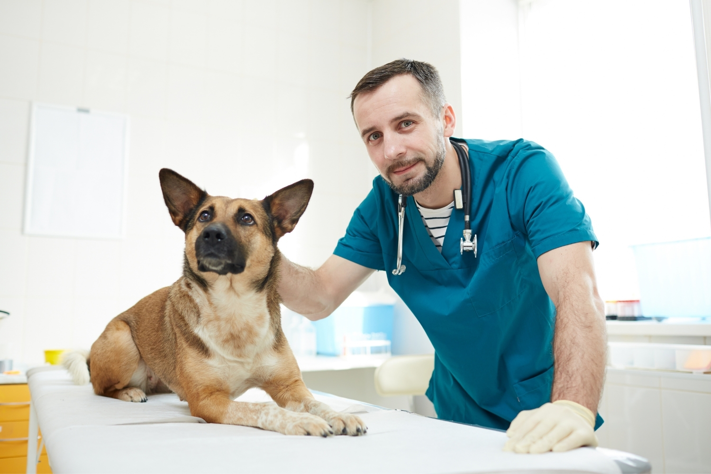 Hund beim Arzt