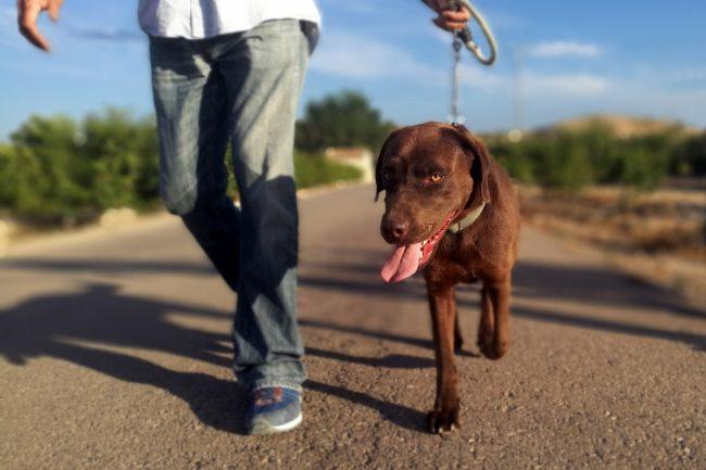 Hund mit Besitzer beim Spazieren