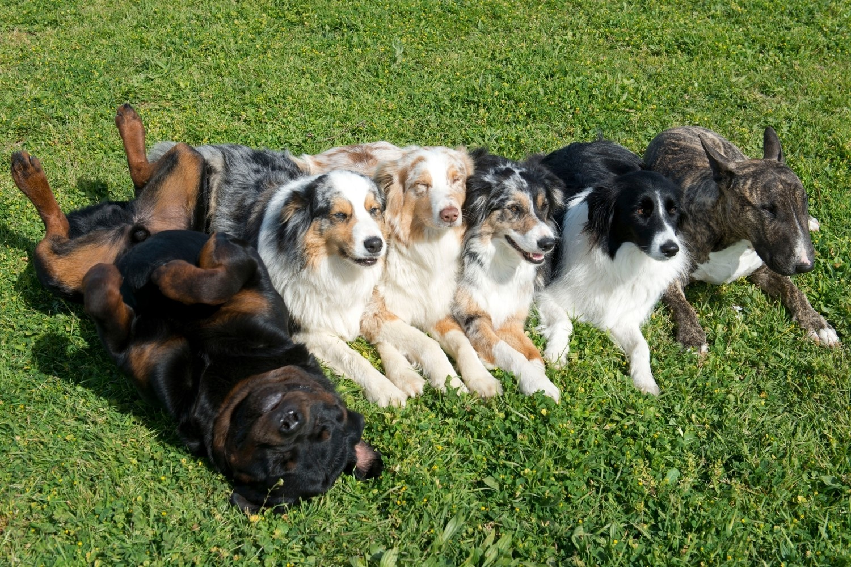 Hundegruppe auf einer Wiese