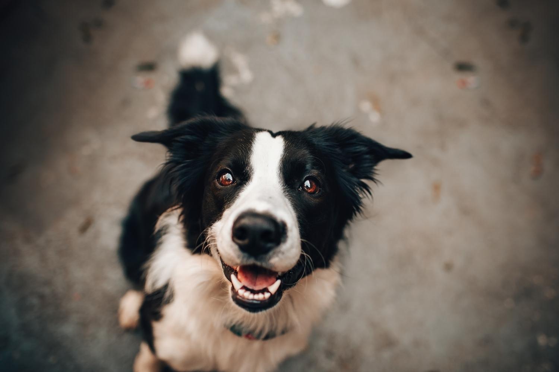 Hund guckt in kamera
