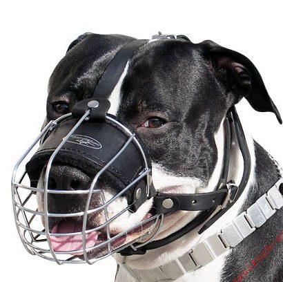 Stahlmaulkorb bei Hunden