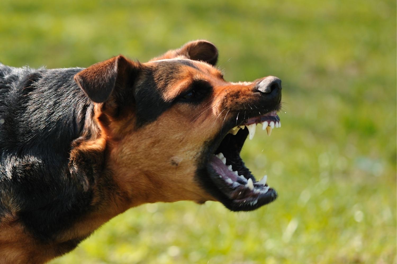 Agressiver Hund