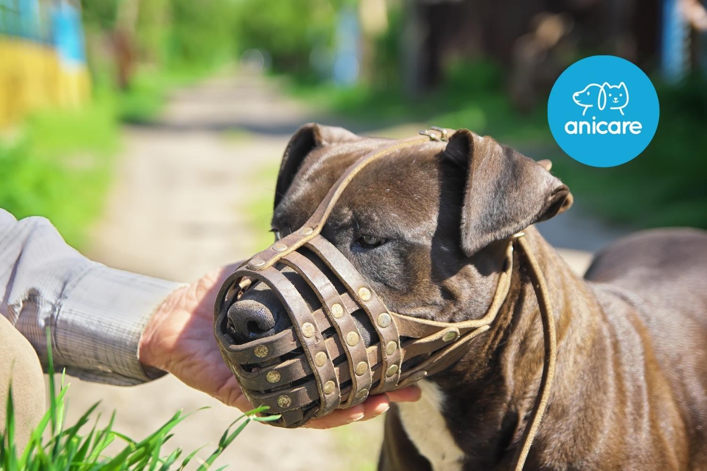 Maulkorb für Hunde – Schützende Pflicht oder wertvolle Hilfe?