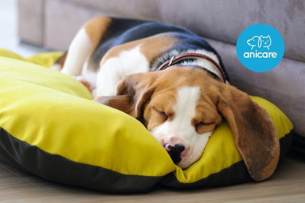 Hundekorb oder Hundebett – Wo schläft der Hund am liebsten?