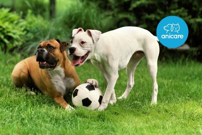 Hundepension: Notlösung oder gute Alternative?