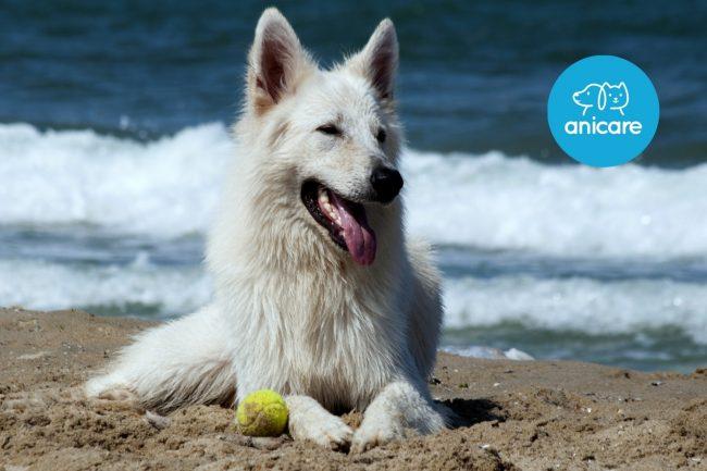 Hunde im Sommer – das musst du wissen