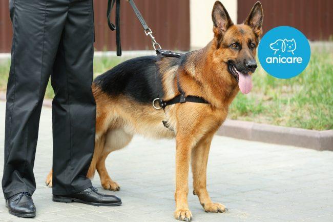 Der Schutzhund: Vom Familienbeschützer bis zum Gangsterfänger