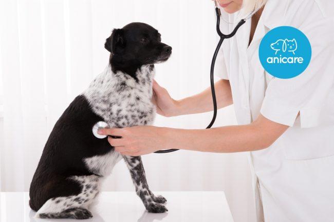 Versicherungen für Hunde – Welche musst du unbedingt haben?