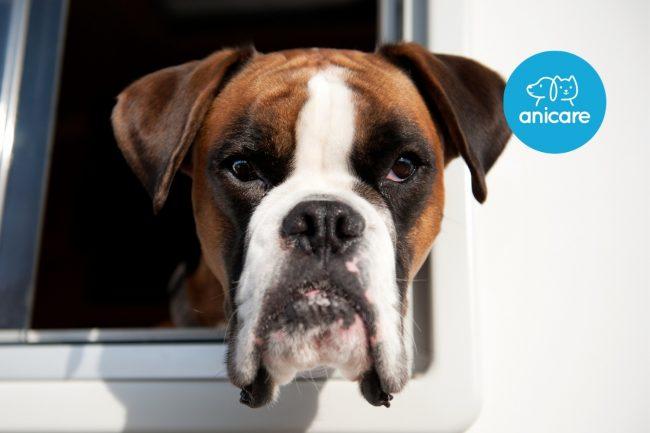 Wie reise ich mit dem Hund im Wohnmobil?