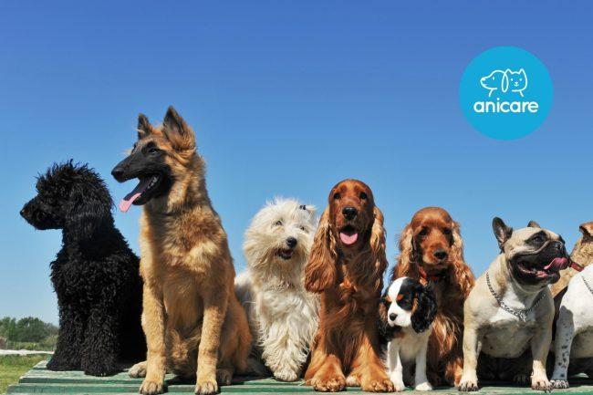 Hunderassen: Welcher ist der richtige?