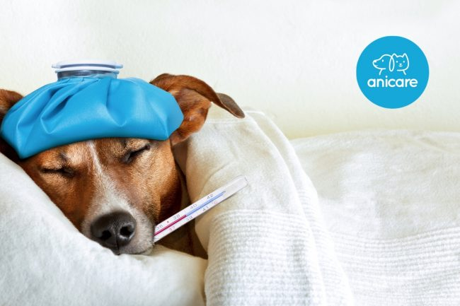 Mittelmeerkrankheit beim Hund – Was du wissen solltest!