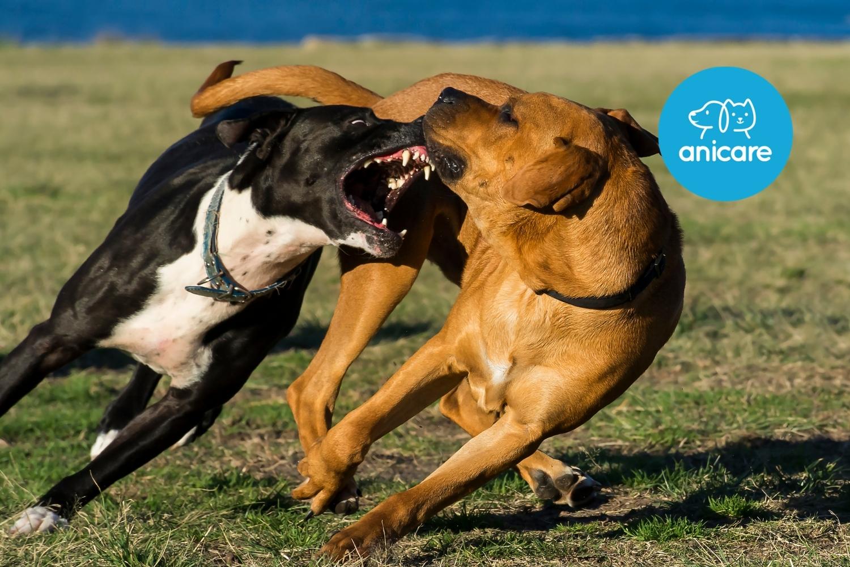 Kampfhunde: Sind sie wirklich so gefährlich?