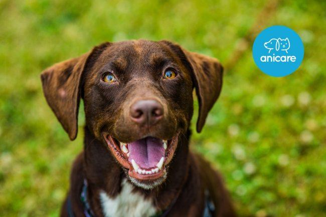Kokosöl für Hunde: Allround Hausmittel oder nur ein Hype?