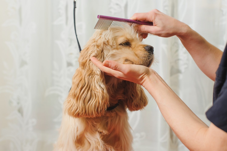Hund im Salon