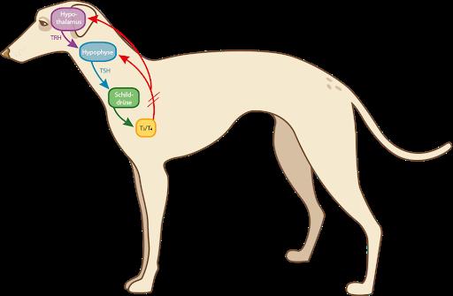 Seitenansicht Hund