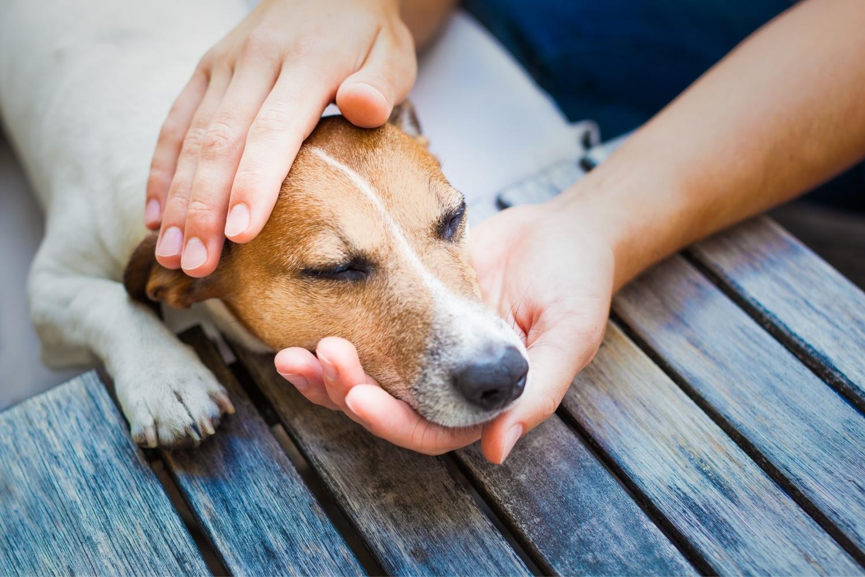 Hund wird auf Kopf gestreichelt
