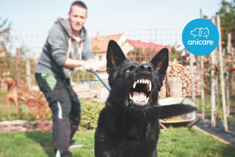 Was tun bei Hundeangriffen?