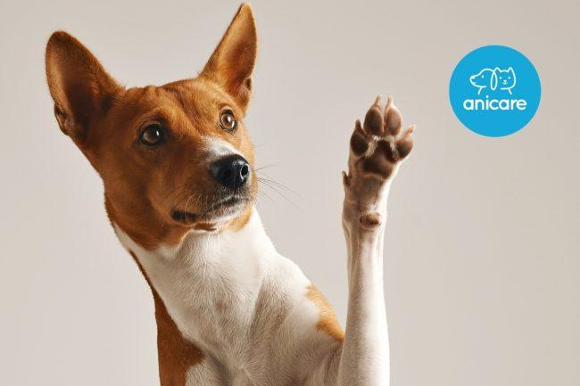 Warum die Pflege von Hundepfoten wichtig ist
