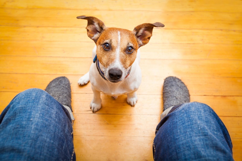 Hund sitzt und guckt nach oben